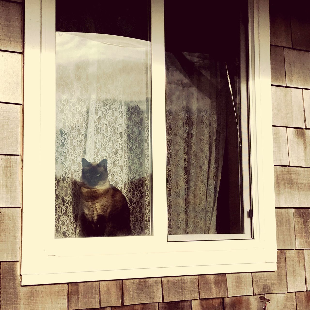 Cat in the window at Cliff House Bed And Breakfast in Waldport Oregon Domestic Cat Window Pets Domestic Animals One Animal Animal Themes Looking Through Window Cat Indoors  Feline Mammal Window Sill Day No People Sliding Door Peaceful Meditative Happy Place