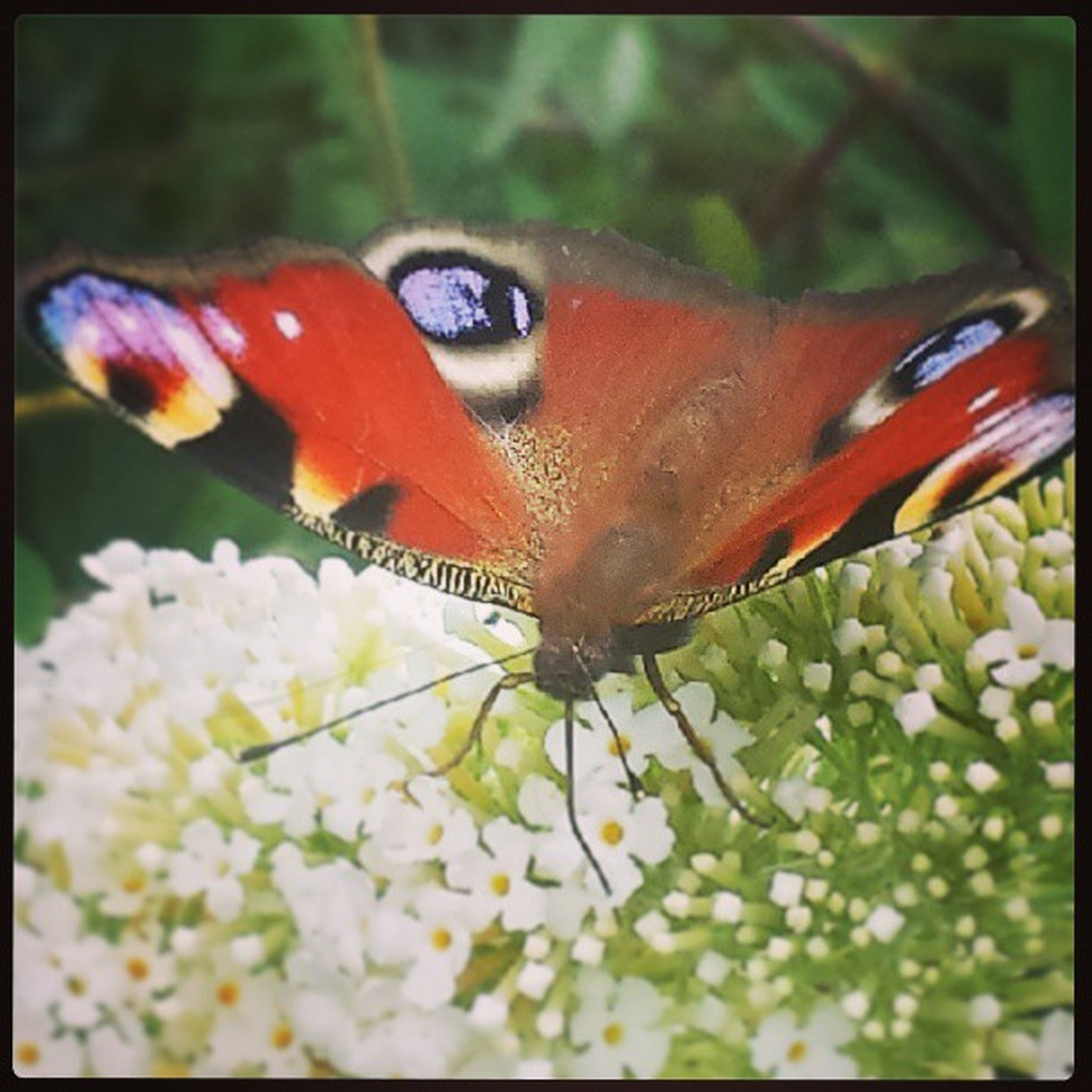 one animal, animal themes, transfer print, wildlife, animals in the wild, close-up, auto post production filter, focus on foreground, butterfly, butterfly - insect, insect, animal markings, beauty in nature, nature, flower, red, selective focus, day, no people, plant