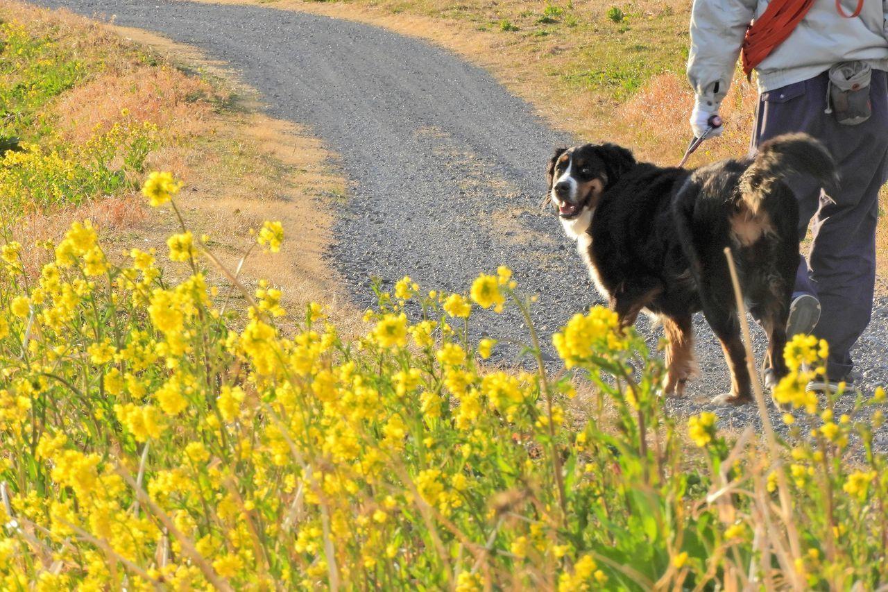 Animal Themes Day Dog Domestic Animals Field Mammal Nature One Animal Outdoors Pets まだ遊び足りない 利根川