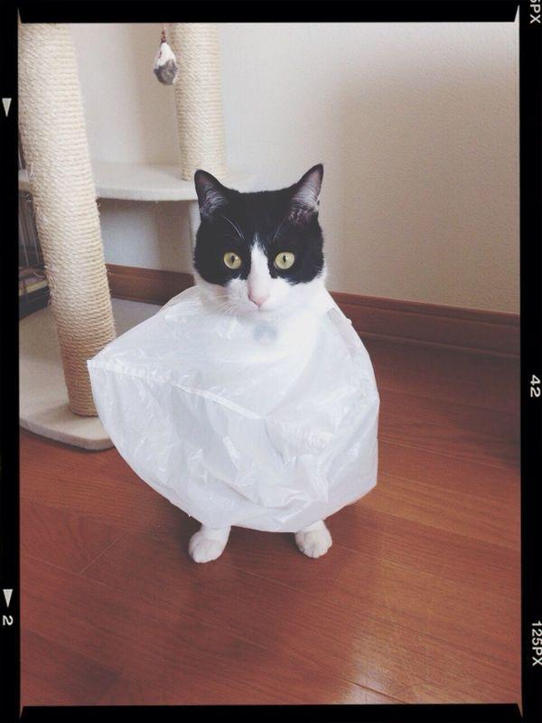 姉のイタズラww Cat Love ネコ 猫