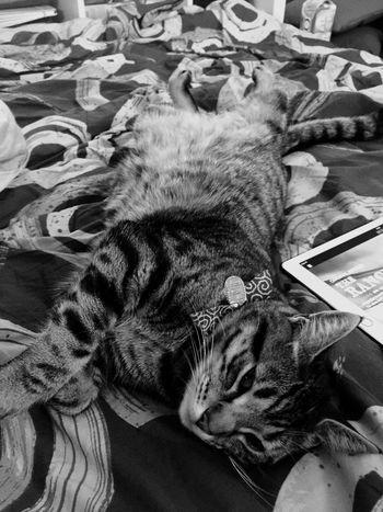 My baby Enjoying Life Relaxing Cat Cats Cat Lovers