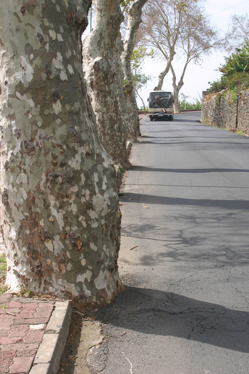 Drivers beware! Bus Day Kerbside Madeira Island Nature No People Outdoors Road Sky Tree Tree Trunk