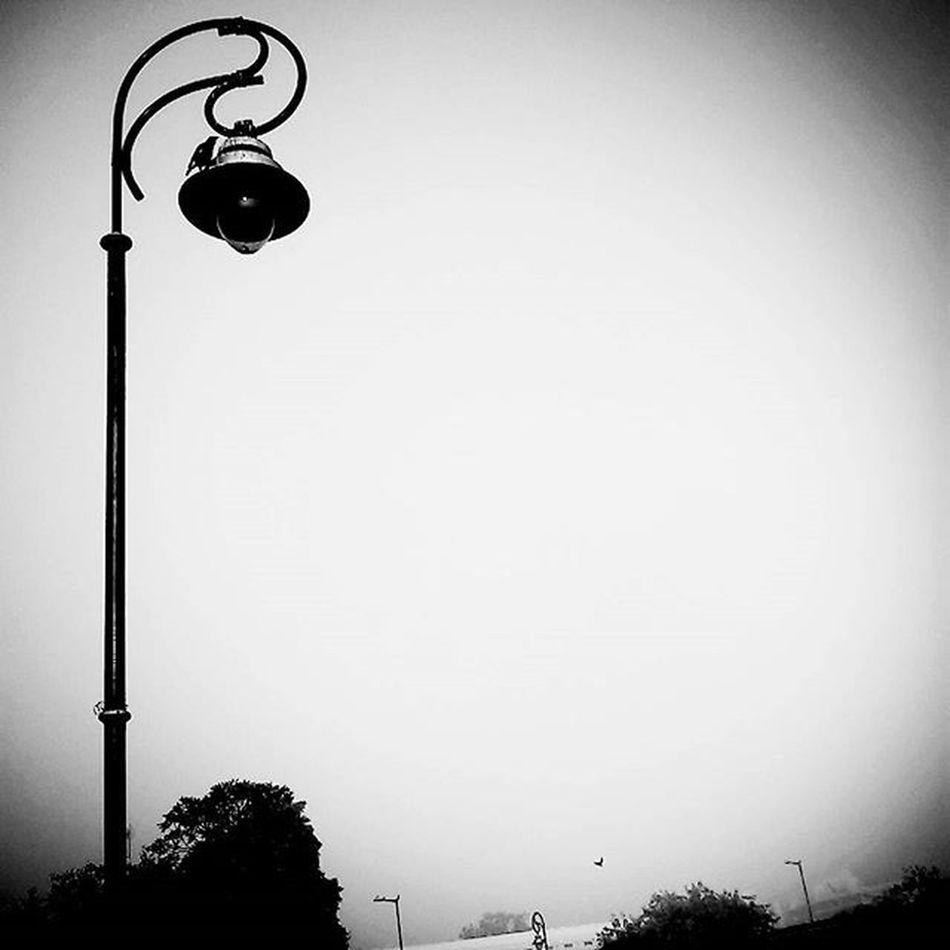 """""""Where there is darkness, there is light"""" Foreonedits Light Pole Blackandwhite Black Beauty Bird Morning Photooftheday Romantic Phone Quote Effect TBT  Follow Straight Angle Nightlamp CentralPark"""