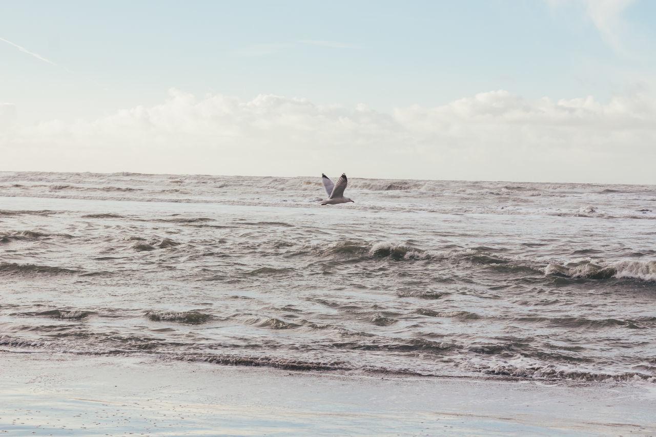 ZANDVOORT BEACH JANUARY 2016 BY ANNA JANE BROOKS Amsterdam Canal B Beauty In Nature Moeve Move Netherlands Sea Seaside Seaside_collection Storm Storm Cloud Sunset Waves Zandvoort