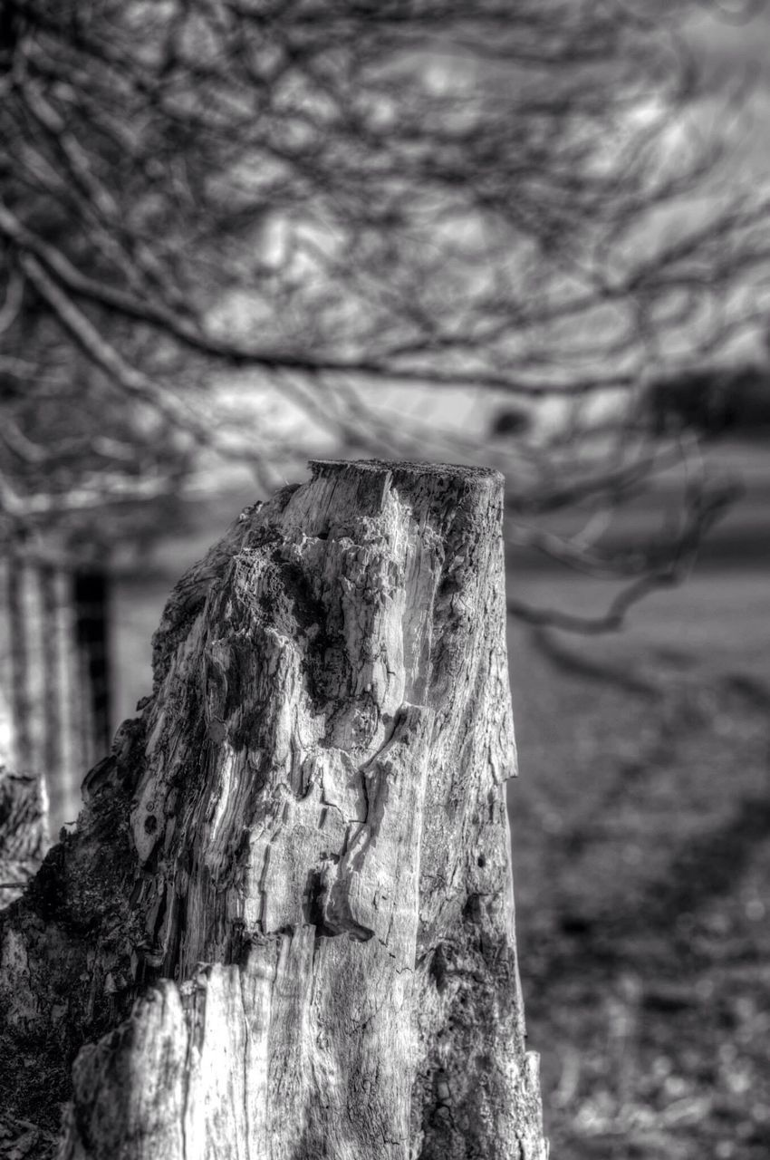 focus on foreground, tree, tree trunk, textured, day, wood - material, close-up, no people, outdoors, nature, tree stump, branch, sky