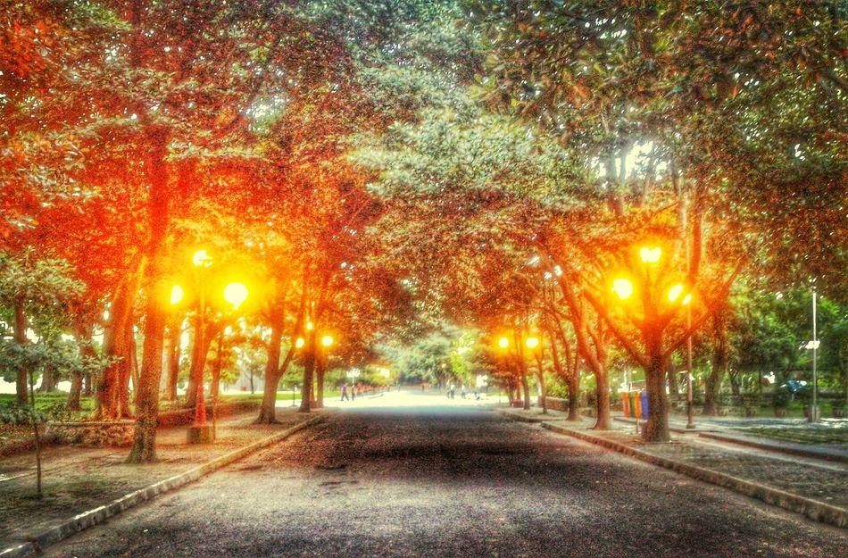 senja. Lights Twilight View Trees