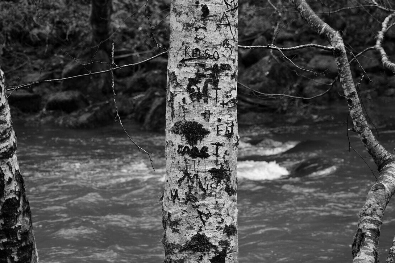 EyeEm Best Shots - Nature EyeEm Nature Lover NikonD3300📷 Nikond3300 Trees Hikingadventures Forest Riverside Carved In Wood EyeEmBestPics From My Point Of View Eyeem Photography Going The Distance Eyem Gallery Taking Photos Eye4photography  Taking Pictures EyeEm Gallery