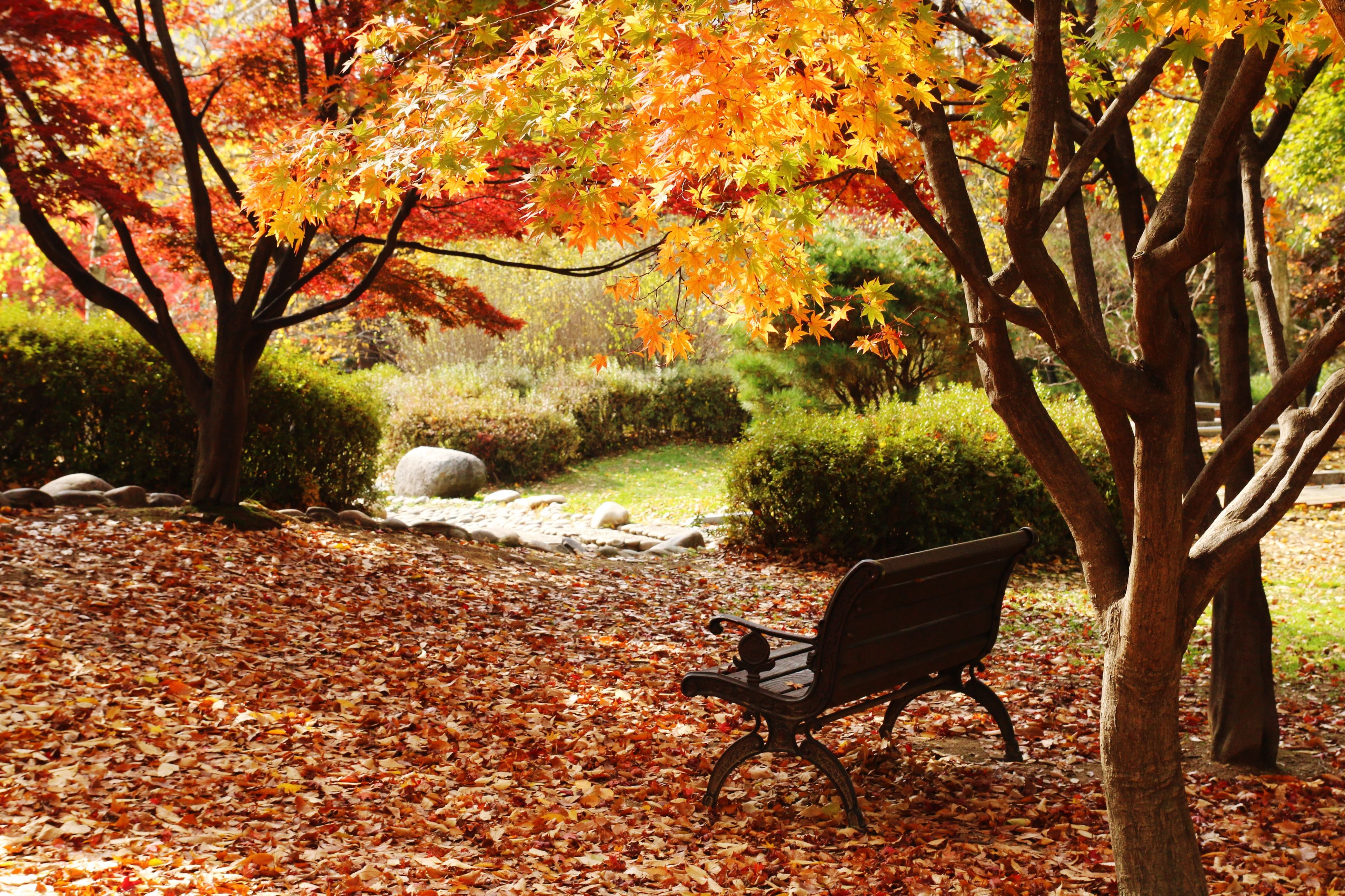 tree, autumn, tranquility, change, branch, nature, leaf, tranquil scene, beauty in nature, season, growth, scenics, park - man made space, tree trunk, bench, sunlight, park, fallen, day, outdoors