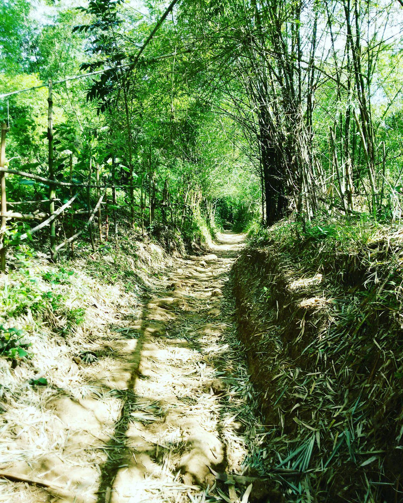 Grass Outdoors Nature Day TravelPhilippines Adventure Trekking