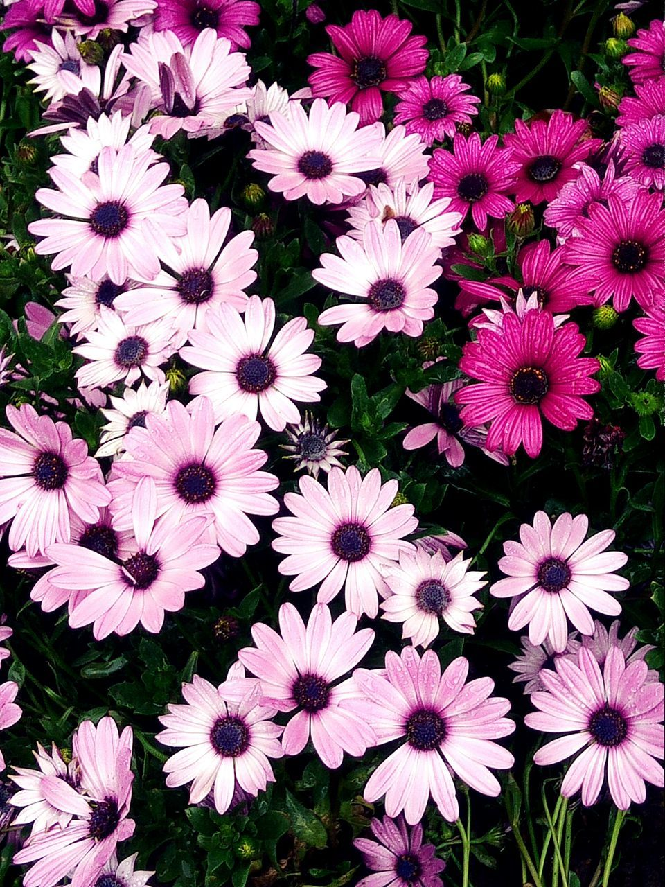 Flowers Blooming Outdoors
