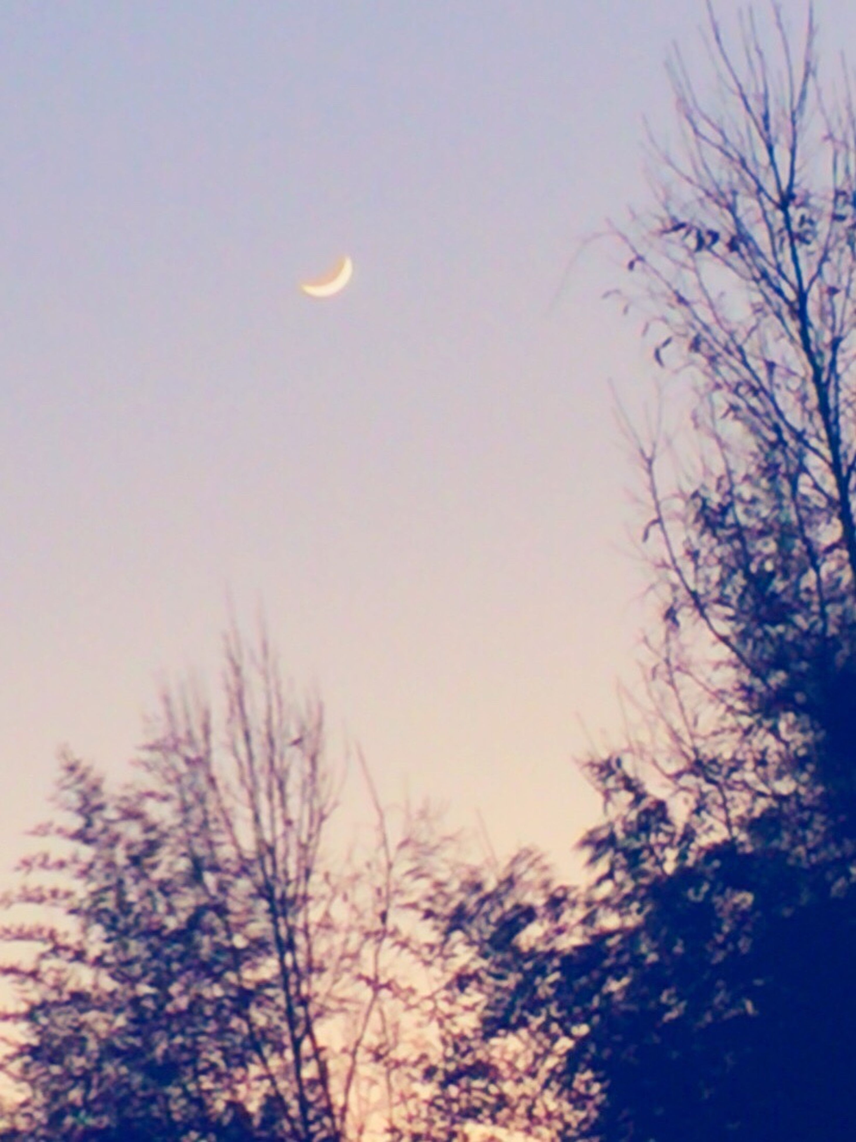 low angle view, moon, bare tree, clear sky, tree, beauty in nature, tranquility, silhouette, scenics, nature, sky, tranquil scene, branch, copy space, sunset, dusk, outdoors, full moon, idyllic, no people