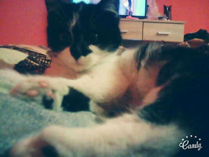 My Cat♡ Sweet♡