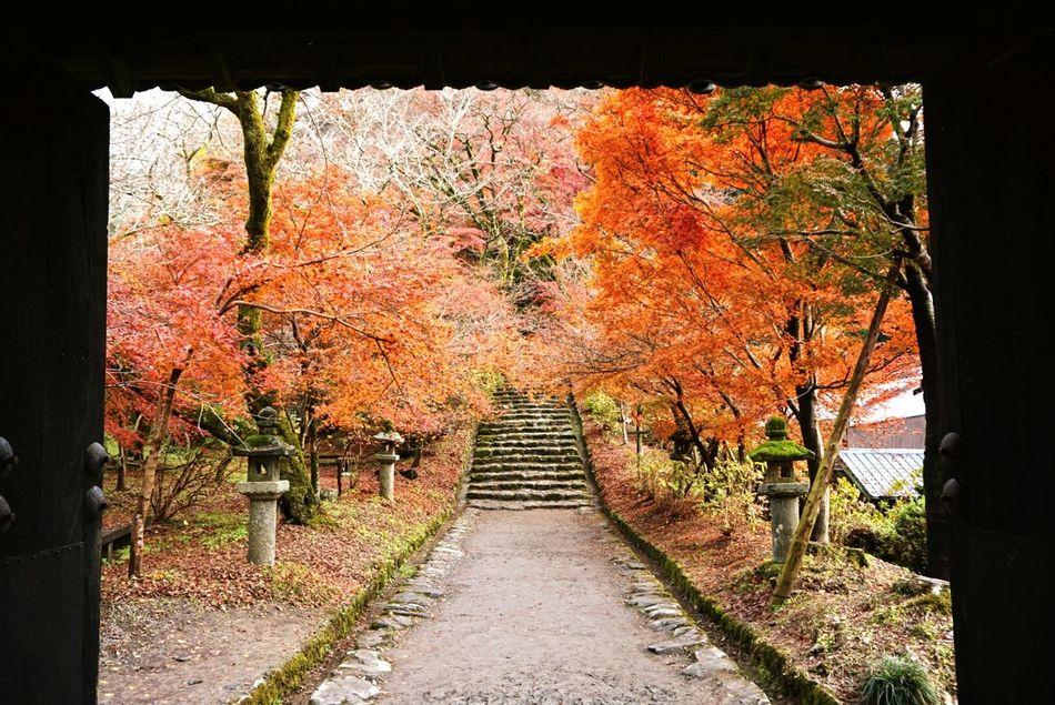 Fukuoka,Japan Shorttrip Nice Day Akizuki Looking At Camera Looking Good Talking Photos Talking Photo Trees Door