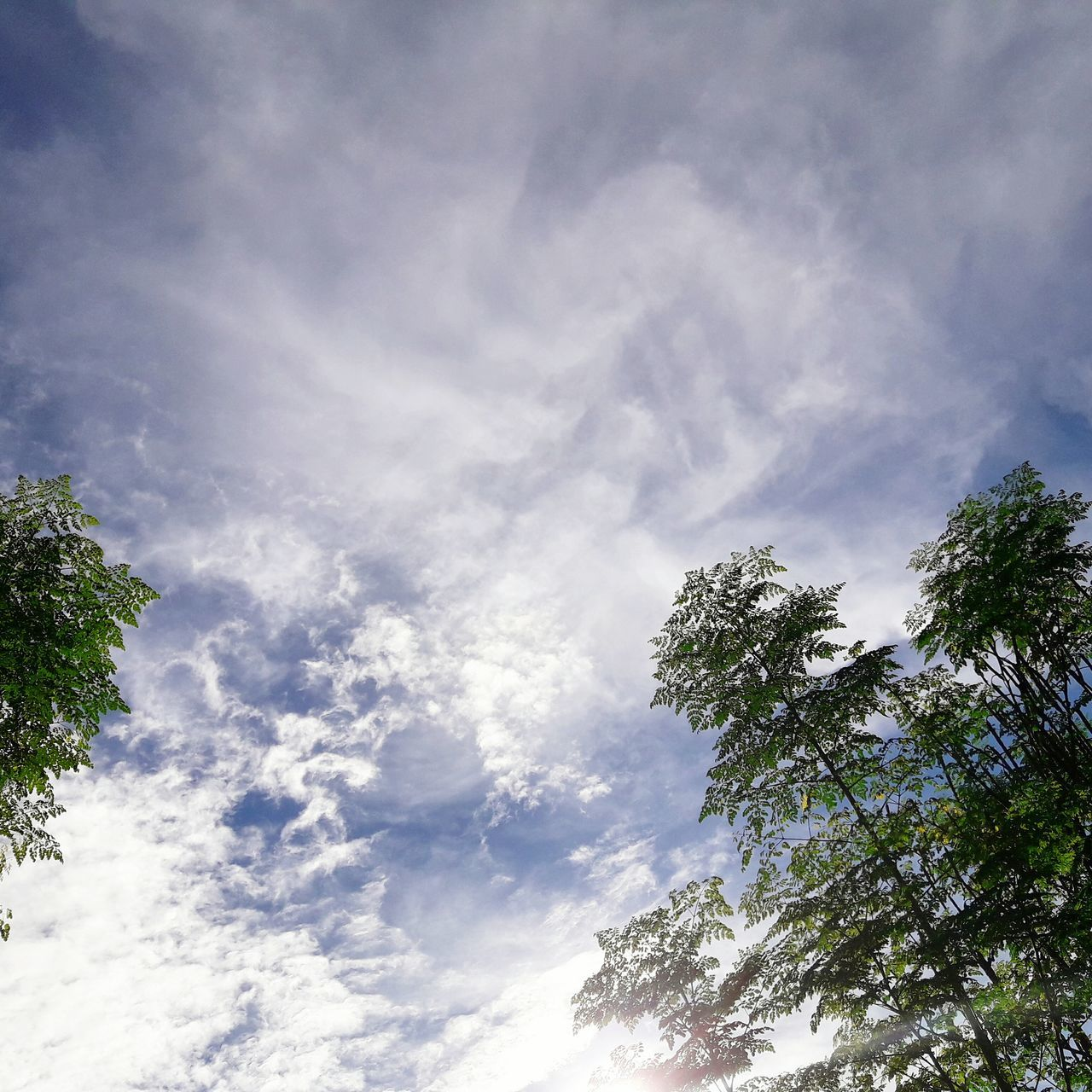 low angle view, tree, sky, nature, cloud - sky, beauty in nature, no people, day, tranquility, growth, scenics, outdoors