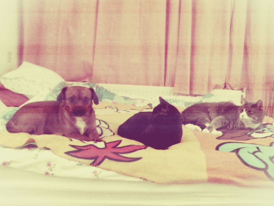 Together they rule the world! Cat♡ Dog❤ My Sweet Pets