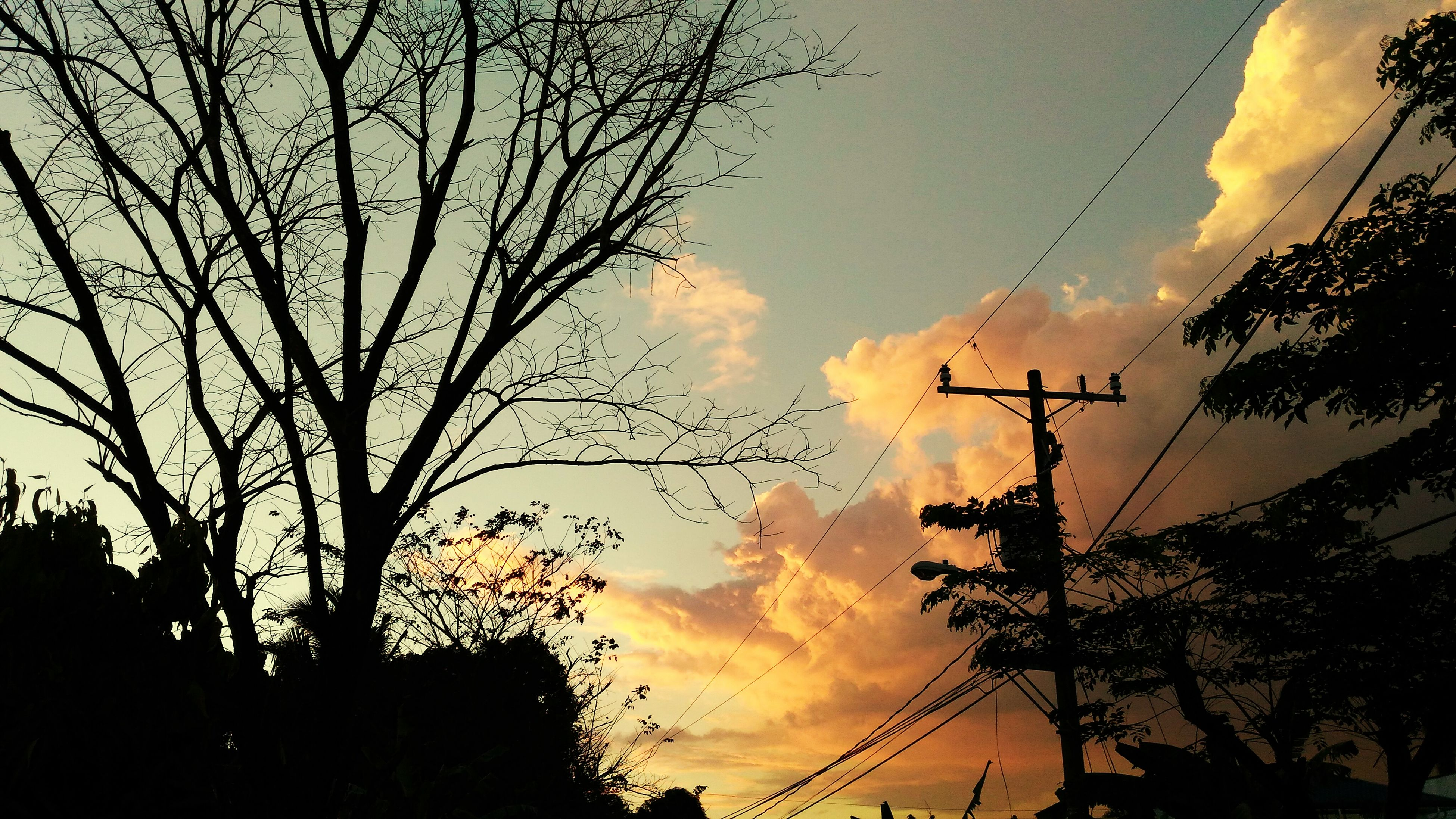 silhouette, sunset, low angle view, tree, sky, power line, electricity pylon, beauty in nature, nature, electricity, tranquility, scenics, cloud - sky, branch, growth, power supply, cable, tranquil scene, outdoors, dusk