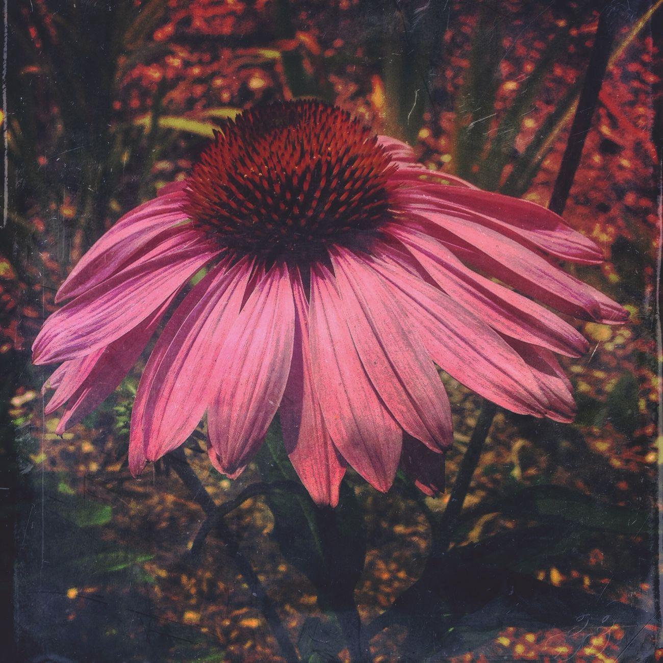 Flowers AMPt_community AMPt_Nature Mextures