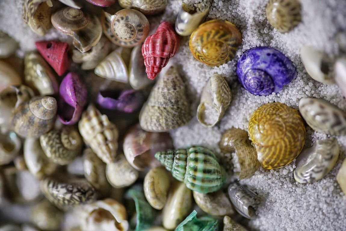 Macro sea shells and sand from Hawaii souven Selective Focus Simple Close-up Nature Beauty In Nature Full Frame Sand Seashells Sony A7RII Sigma105mm