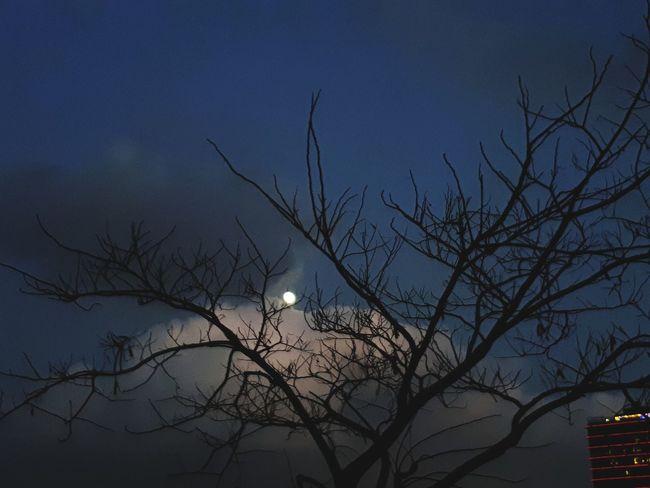 Moon Bare Tree Tree Night Moonlight No People Astronomy