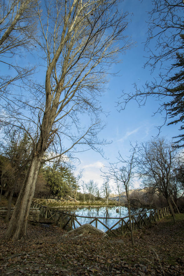 Architecture Beauty In Nature Branch Bridge - Man Made Structure Clear Sky Day Fuenmayor Jaen Province Jaen Provincia Lake Nature No People Outdoors Scenics Sierra Magina Sky Torres Tree Water
