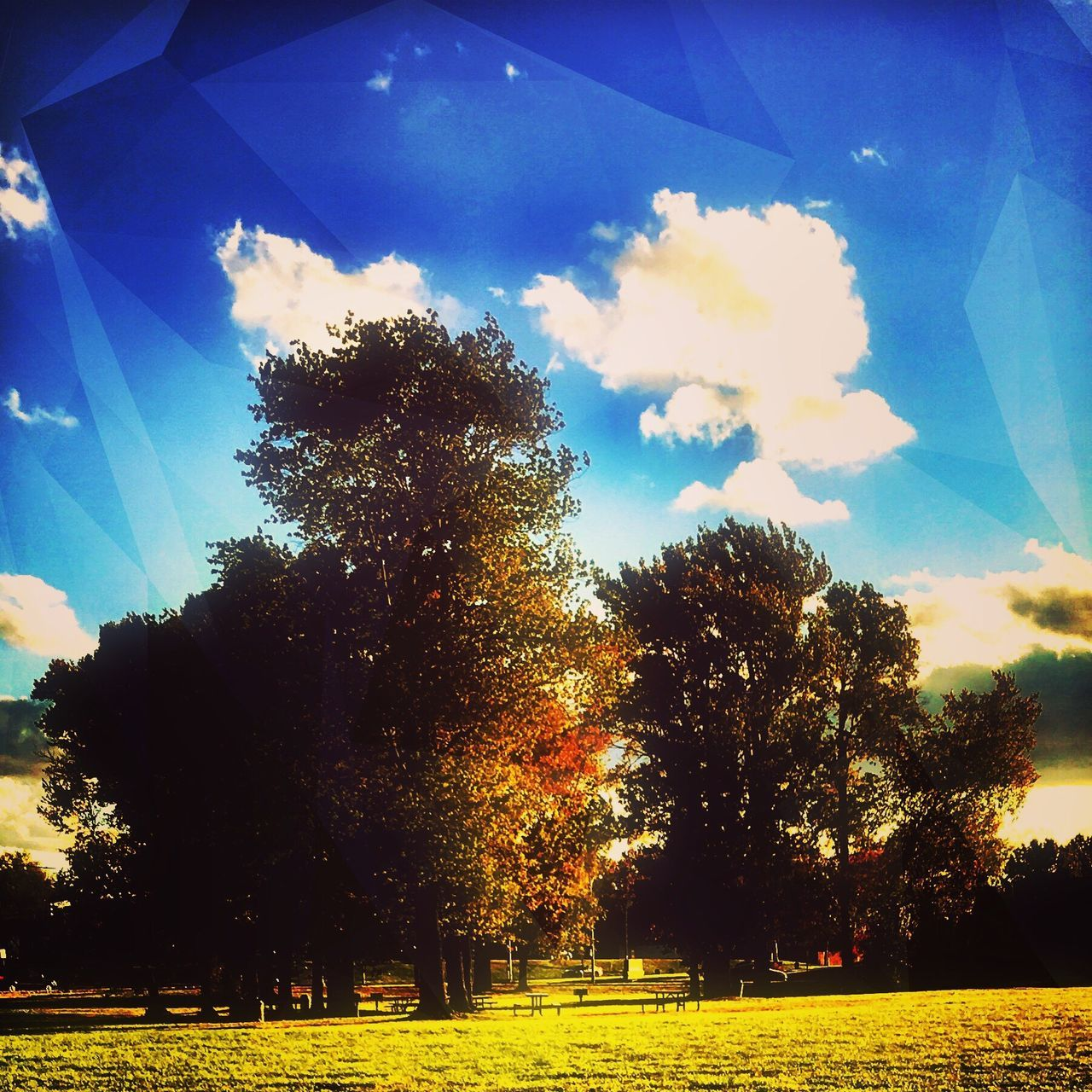 Treescape Camerafilters Tree Sky Nature Growth No People Beauty In Nature Grass Cloud - Sky Outdoors Landscape Iphonephotography Fall Beauty Fallfoliage