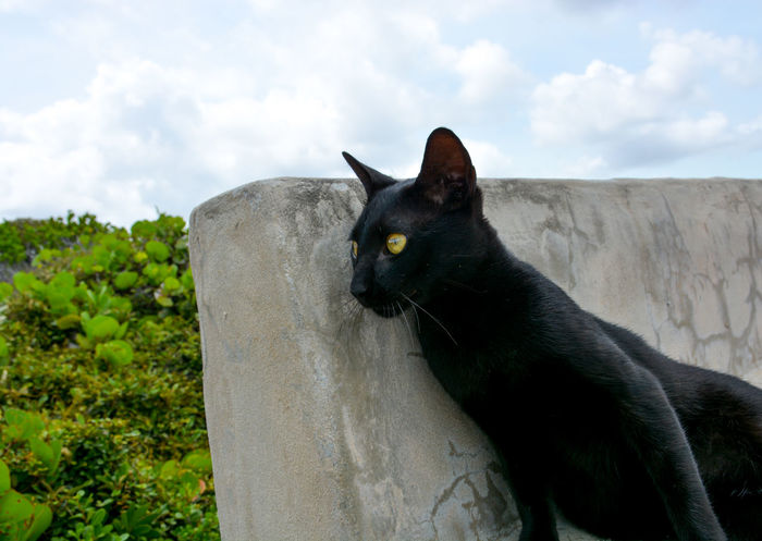 Black cat sitting at the Circle of Hope Black Cat Cats Of EyeEm Circle Of Hope Turks And Caicos Turks And Caicos Islands Animal Themes Black Color Cat Close-up Cloud - Sky Day Domestic Animals Domestic Cat Feline Mammal Middle Caicos Nature No People One Animal Outdoors Pets Sitting Sky Tree