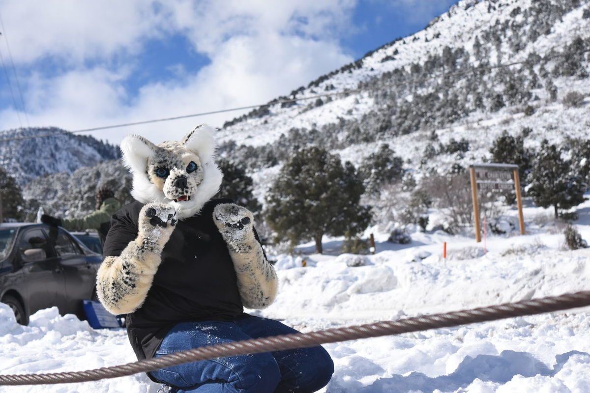 This guy adapts the season very well: This is how I roll, LOL, cute! :-) Adult Cloud - Sky Cold Temperature Day Having A Good Time Having Fun Lasvegasnevada Lee Canyon Mammal Mountain Mt Charleston Nature One Person Outdoors People Portrait Sky Snow Travel Winter