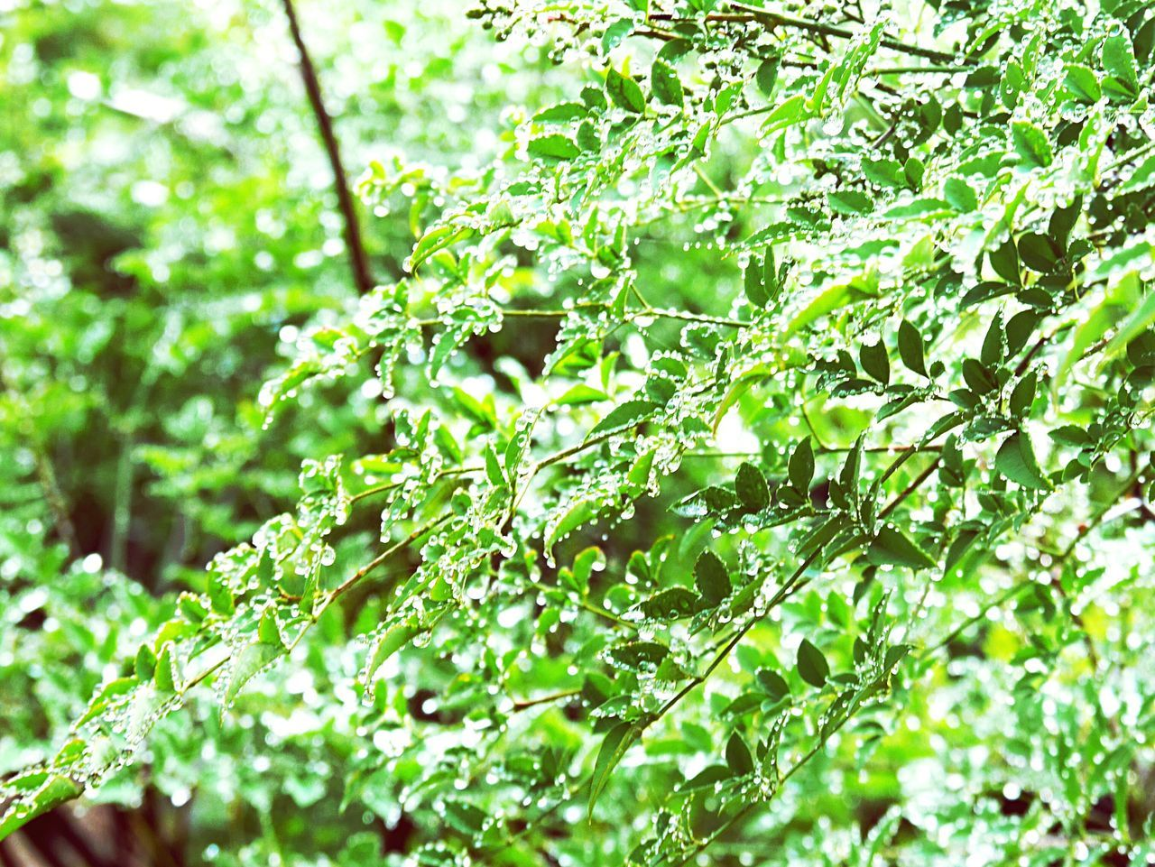 Beautiful Plants Green Nature Water Drop Cool Happy Rein Outdoor Japanese  Tree Sky Mountain Worest