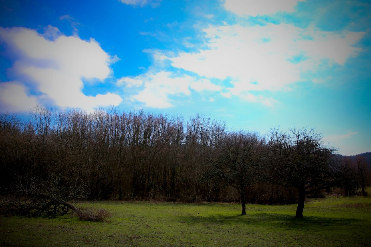 Bare Tree Beauty In Nature Cloud - Sky Day Growth Nature No People Outdoors Scenics Sky Tranquil Scene Tranquility Tree
