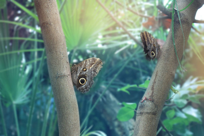 Animal Themes Beauty In Nature Butterflies Close-up Nature No People Tree Trunk Zoology