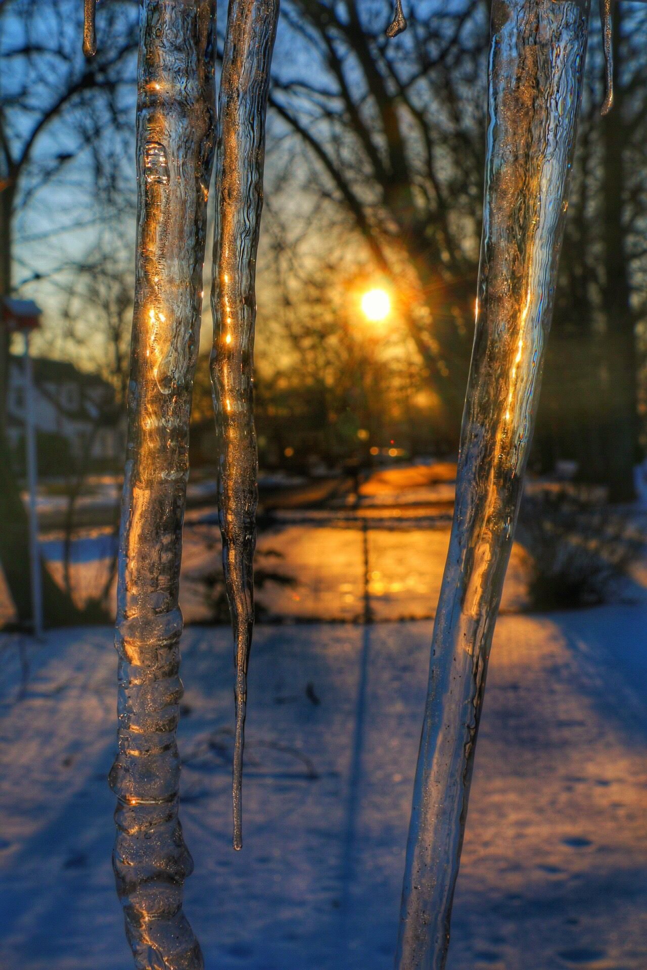 Tree Nature Tree Trunk Branch Outdoors Snow Cold Temperature Tranquility Forest Winter No People Day Ice Beauty In Nature Tranquil Scene Bare Tree Sky Icicles Sunset Ice Backgrounds Gold Shiny Gold Colored Close-up