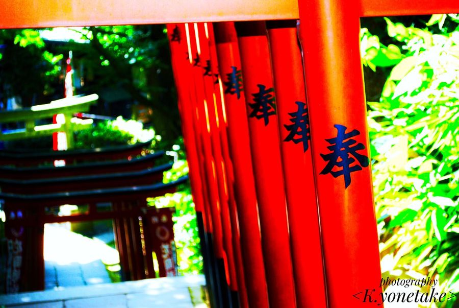 Shrine Japan Tokyo Ueno Tousyougu Close-up Red Culture Culture Of Japan Torii Gate 日本 東京 上野 東照宮 上野東照宮 ファインダー越しの私の世界 一眼レフ EyeEm EyeEm Best Shots Photo Photography Photographer 赤緑 Nature_collection