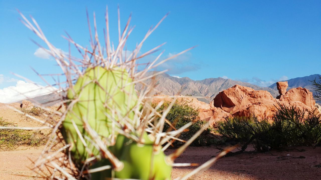 Blue Desert Arid Climate Clear Sky No People Nature Valles Calchaquíes Norte Argentino Salta  Cafayate Plant Beauty In Nature Nature Reserve Cardo Tranquil Scene