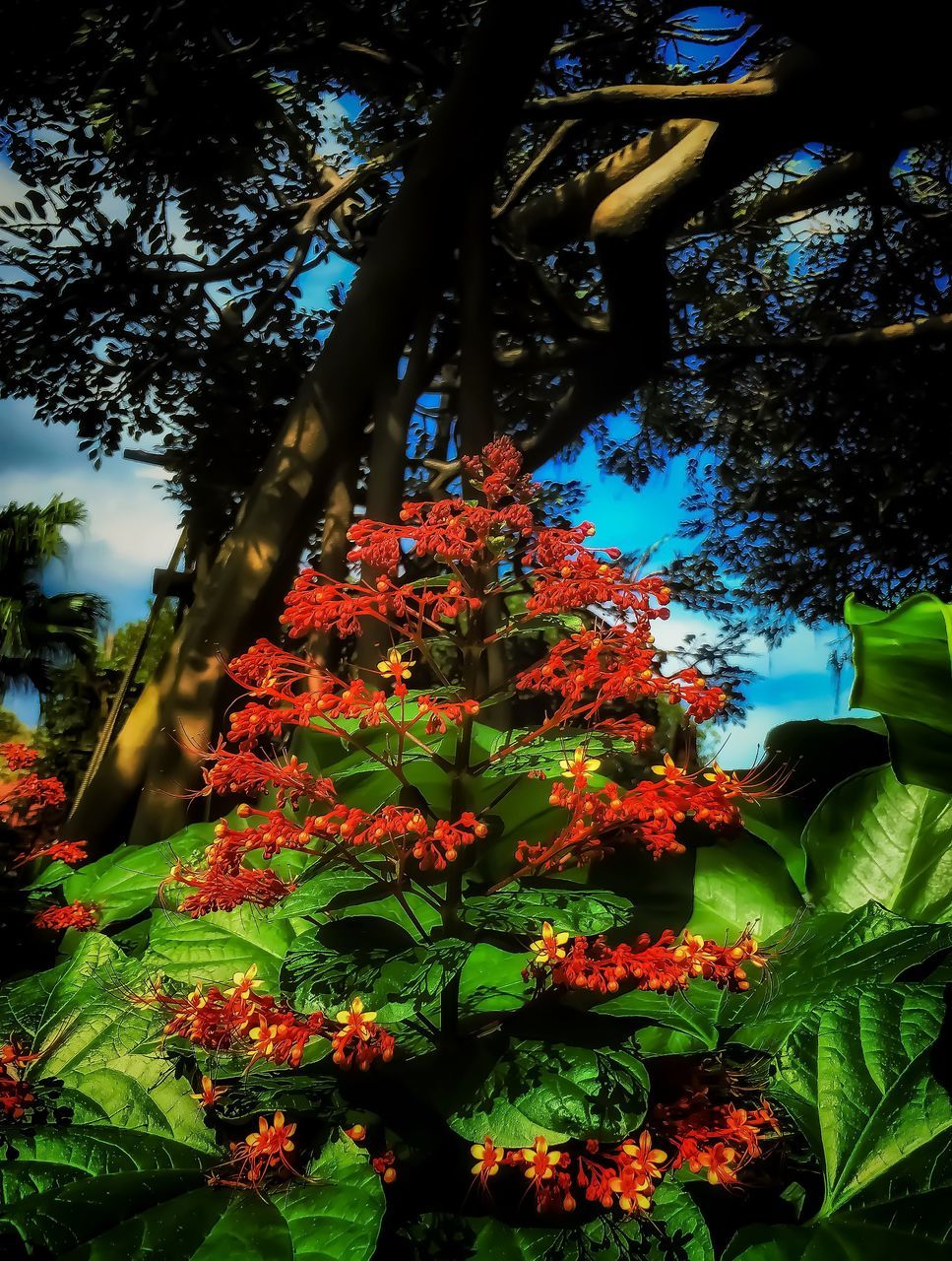 tree, growth, nature, beauty in nature, low angle view, flower, day, leaf, outdoors, plant, no people, freshness
