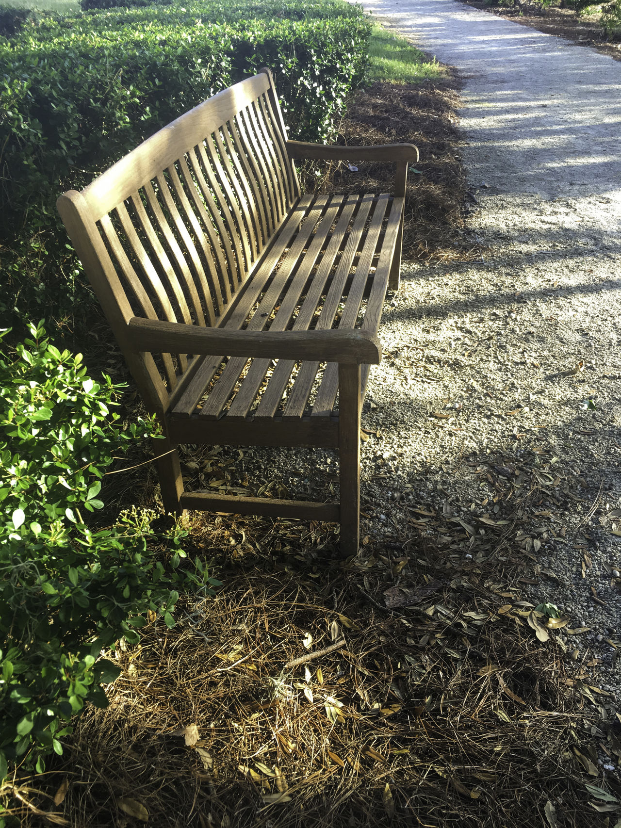 A place to rest Bench Chair Day Grass Morning Shadows... Nature Outdoors Path Trail Tree Wooden