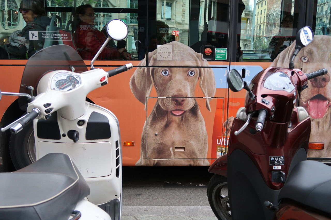 Want a ride? Advertisement Bus City Life Dogs Domestic Animals Land Vehicle Mode Of Transport Motorbike Motorcycle Motorcycles No People Outdoors Puppies Scooter Scooters The Street Photographer - 2017 EyeEm Awards Transportation