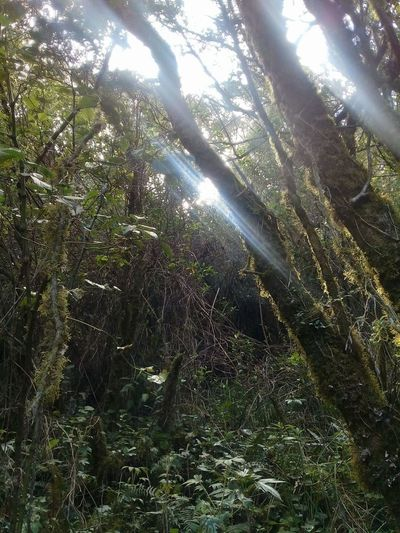 Bosque de Cuichoca Beauty In Nature Branch Day Forest Growth Landscape Low Angle View Nature No People Outdoors Sunlight Tranquil Scene Tranquility Tree Tree Trunk
