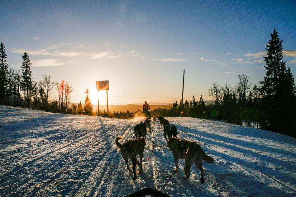 Ski Skiing Snow Sport Sweden Winter Winter Wonderland Wintertime Dog