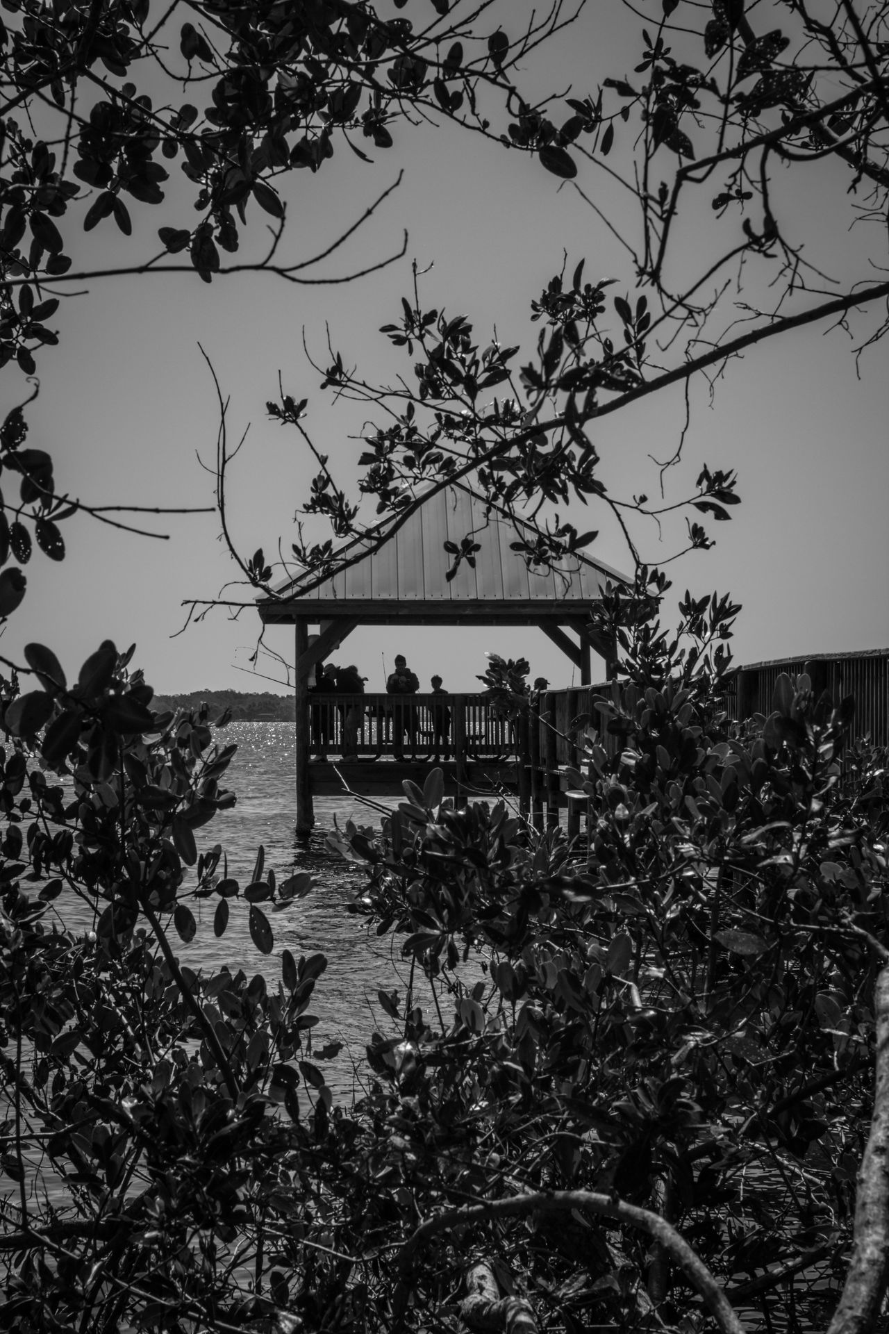 Fishing on the pier Blackandwhite Photography Fishing Fishing Time Indian River Indian River Lagoon Looking Through Pier Fishing Riverscape Trees Wooden Pier