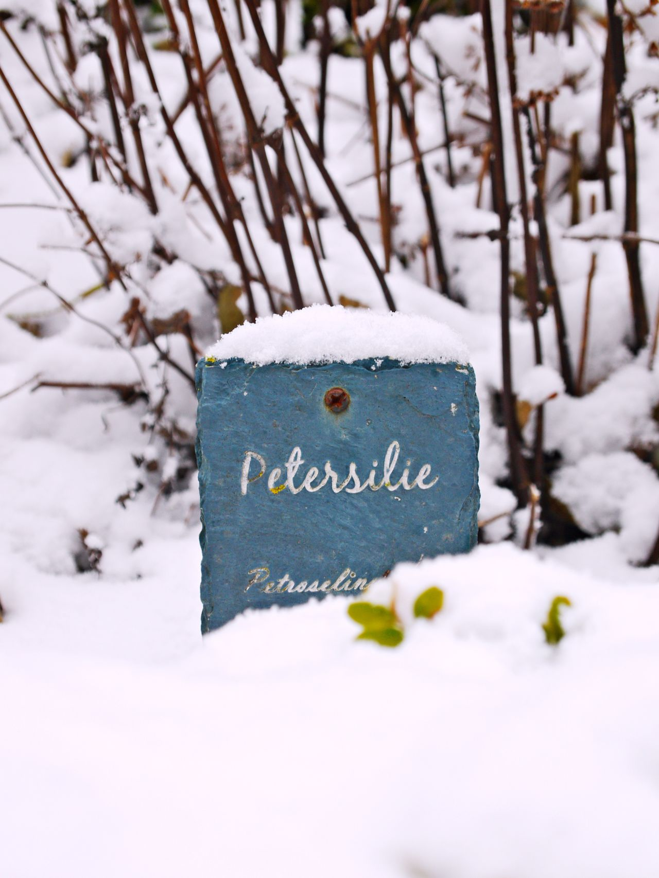 Close-up Cold Temperature Day Focus On Foreground Frozen Herbal Garden Nature No People Outdoors Petersilie Plant Signboard Snow Text Tree Weather Winter