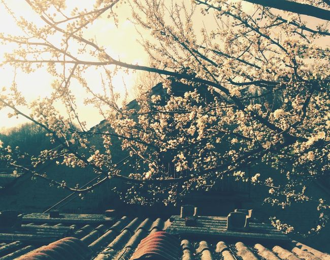 Here Belongs To Me Lovespring Blooming Tree Old House WhyIlove Relaxing Inspiration Croatia Beautiful Nature