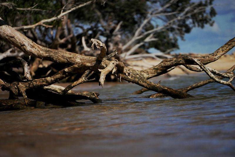 EyeEm Selects Stradbroke Island Sea Seascape Seaside Ocean Reptile Animal Wildlife Animals In The Wild No People Nature One Animal Alligator Water Outdoors Animal Themes Close-up Day Tree
