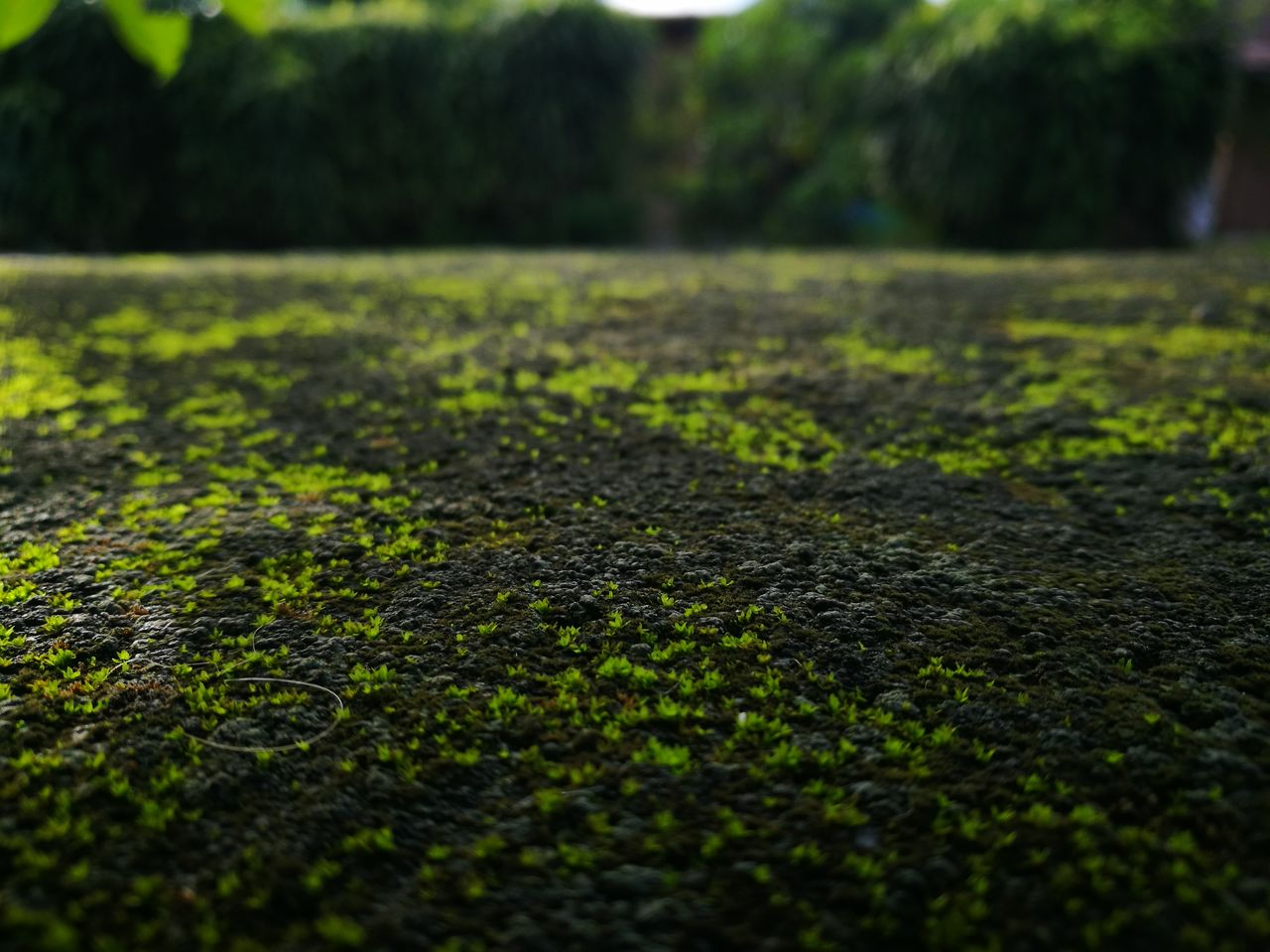 nature, surface level, no people, tranquility, growth, grass, green color, outdoors, day, beauty in nature, close-up, scenics, tree