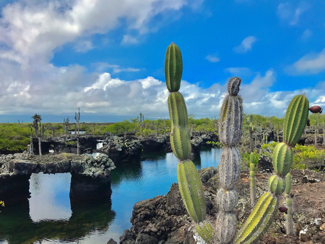 sky, no people, cactus, nature, outdoors, day, cloud - sky, growth, tranquil scene, beauty in nature, tranquility, scenics, rock - object, water, green color, travel destinations, saguaro cactus