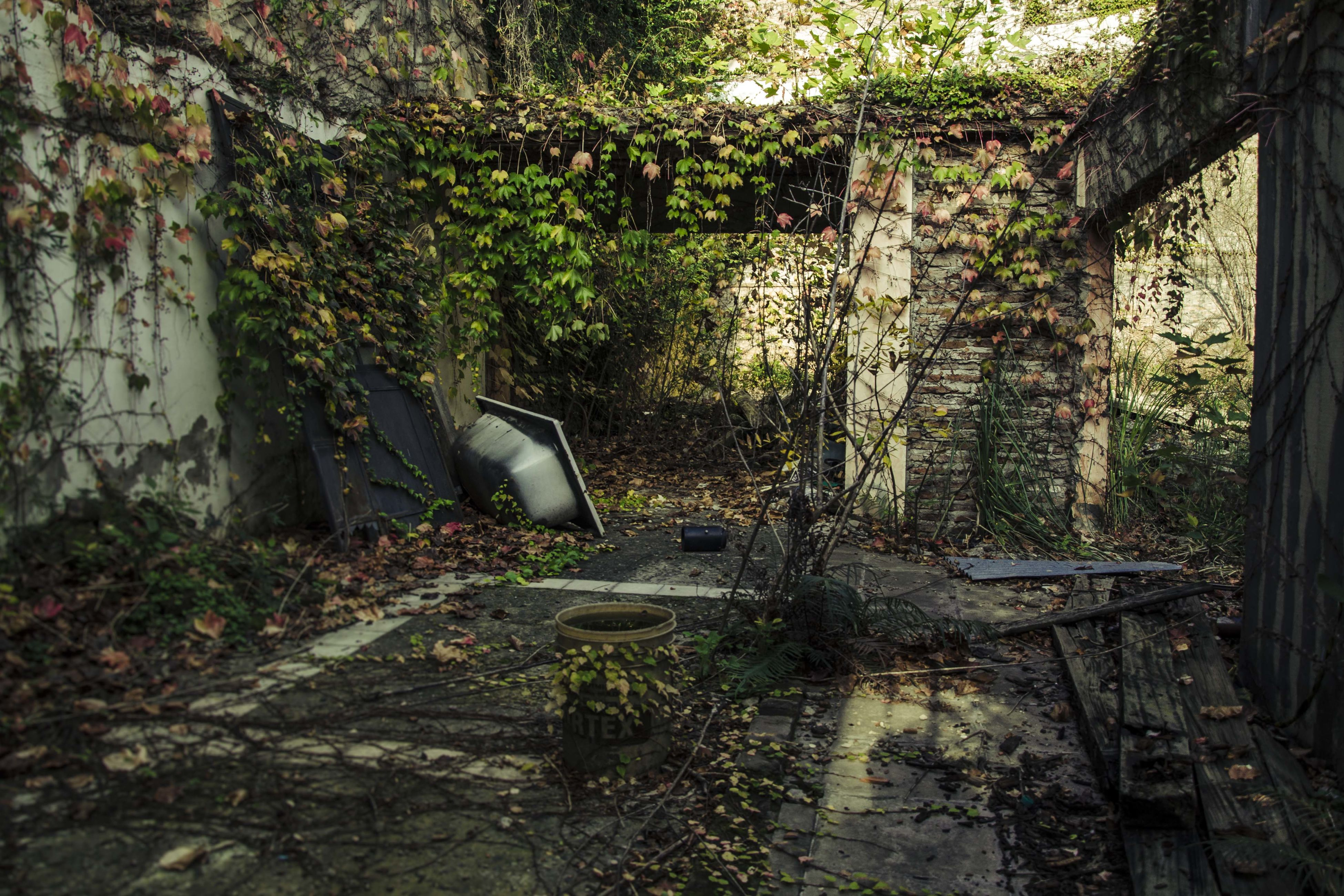 tree, abandoned, growth, built structure, tree trunk, plant, old, architecture, forest, day, house, absence, wood - material, chair, no people, sunlight, branch, obsolete, damaged, nature