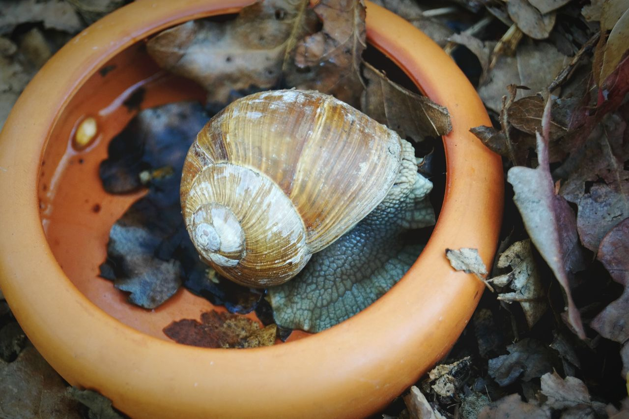 animal shell, snail, animal themes, no people, nature, animals in the wild, close-up, one animal, day, animal wildlife, outdoors, fragility