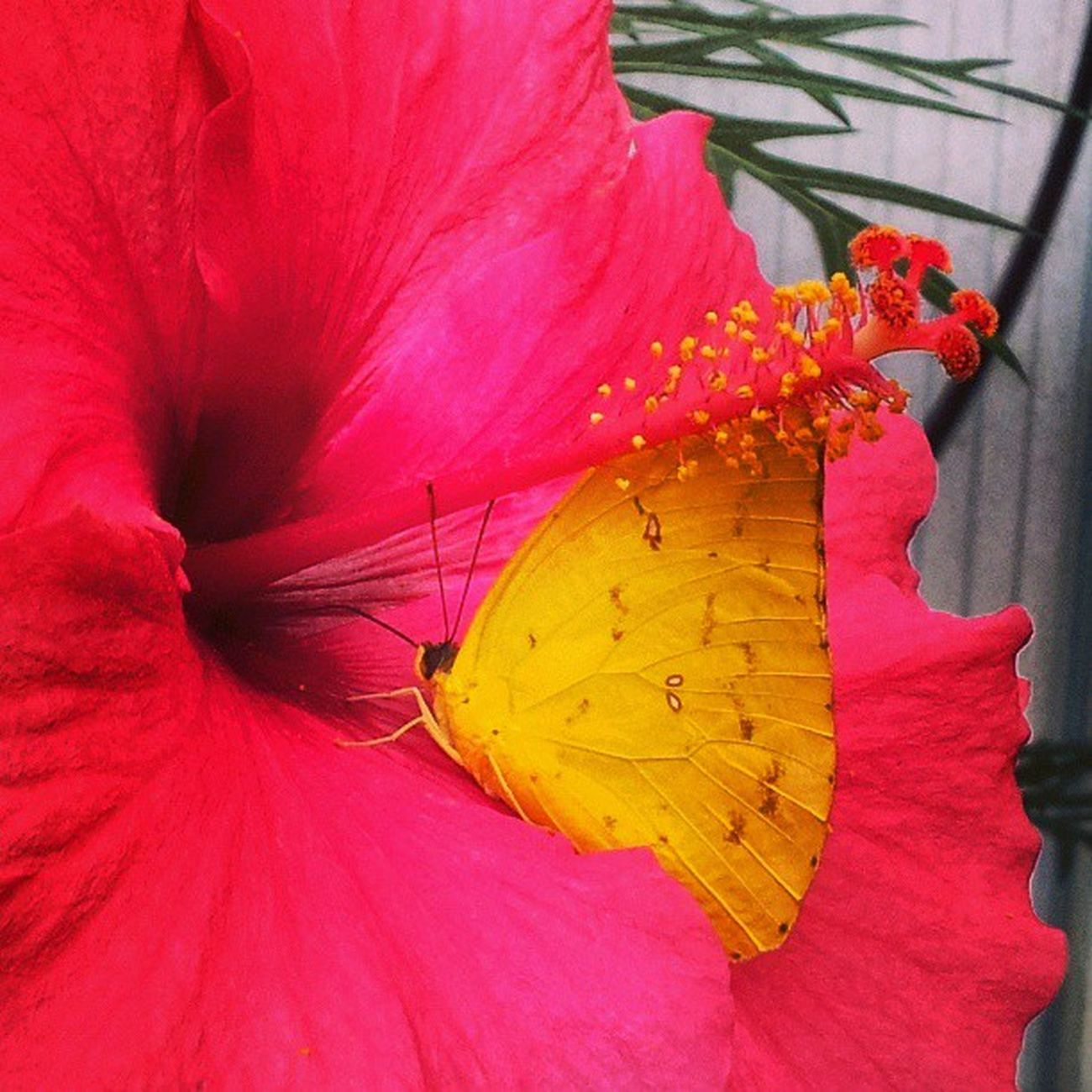 Butterfly Flower Nature Amsterdam Netherlands Instamood Insta_netherlands