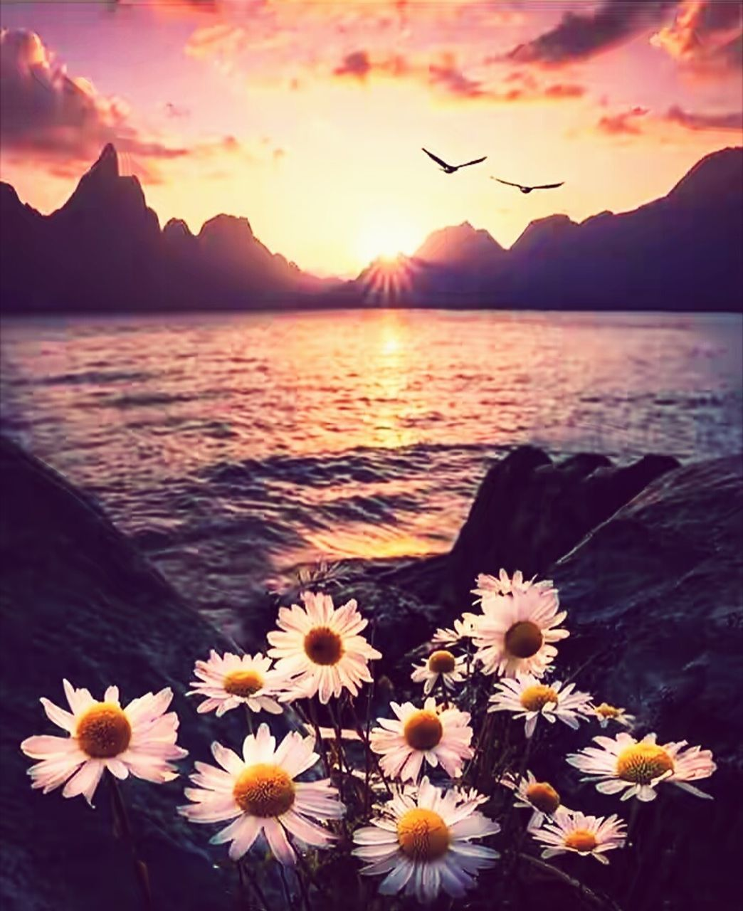 sunset, beauty in nature, nature, mountain, flower, water, scenics, sea, tranquility, sky, sun, outdoors, tranquil scene, mountain range, no people, sunlight, flower head, fragility, close-up, day, freshness
