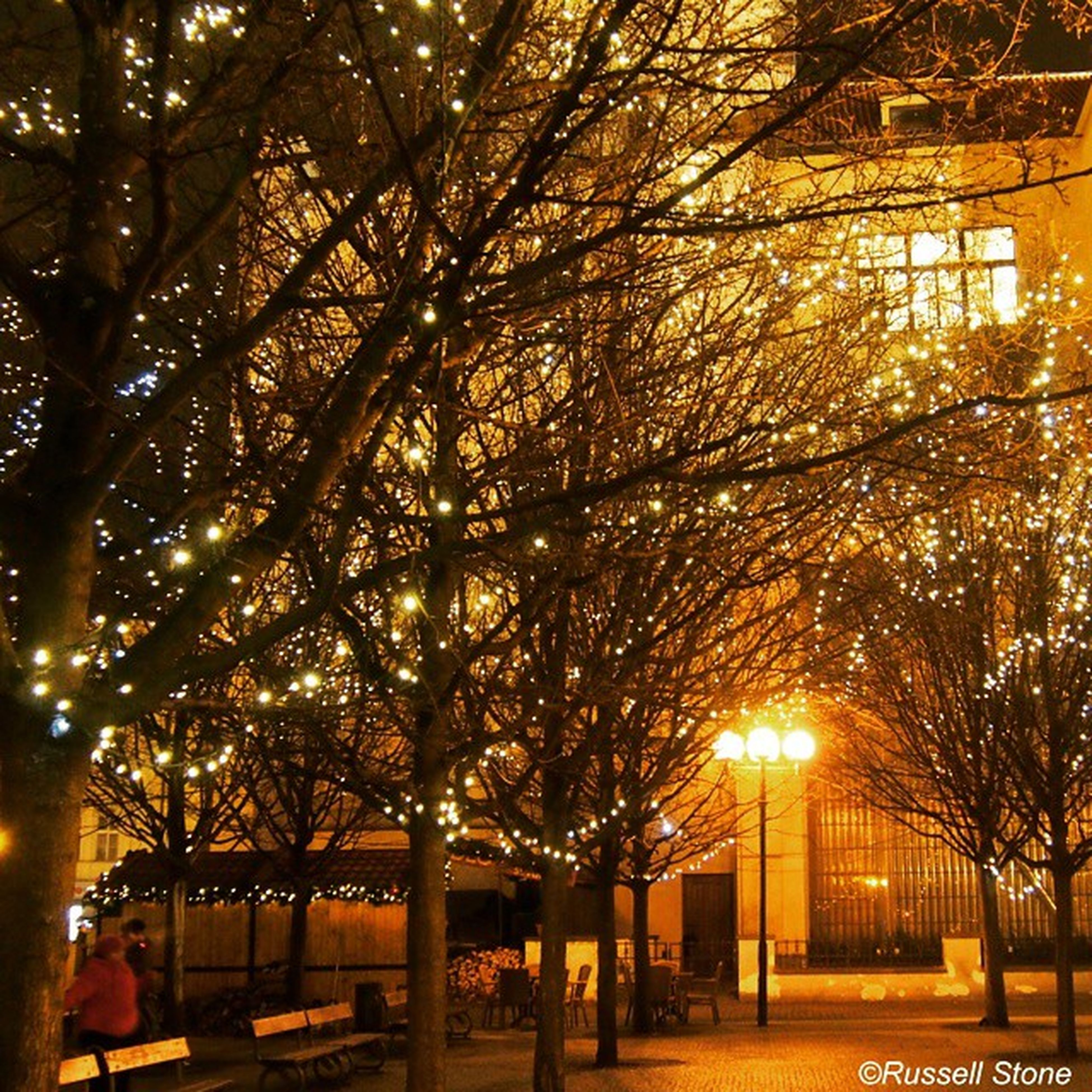 tree, illuminated, street light, lighting equipment, built structure, the way forward, architecture, night, treelined, footpath, building exterior, branch, in a row, tree trunk, street, incidental people, outdoors, city, growth, nature
