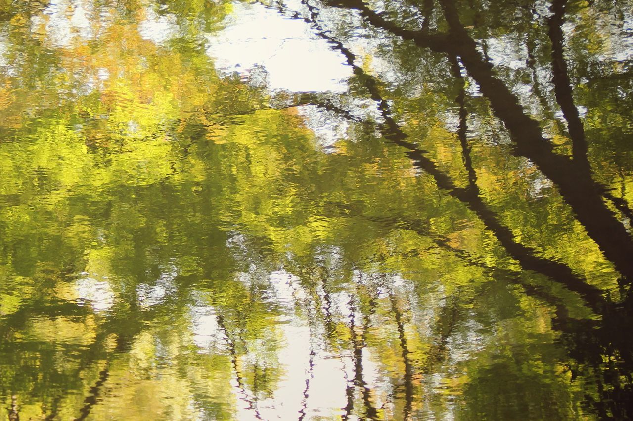 Looking into the lake   Tree Nature Reflection Green Color No People Full Frame Water Backgrounds Beauty In Nature Close-up Low Angle View Quite Moments Personal Perspective Still Life Silhouette Sunlight Japan Through My Eyes Tokyo Japan  